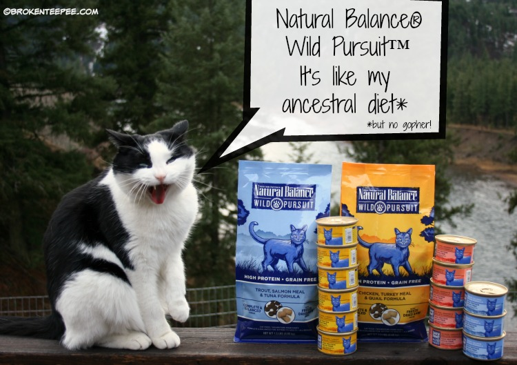 Natural Balance, Wild Pursuit, PetSmart, Harry the Farm cat, natural pet food, #NaturalBalance, #ad
