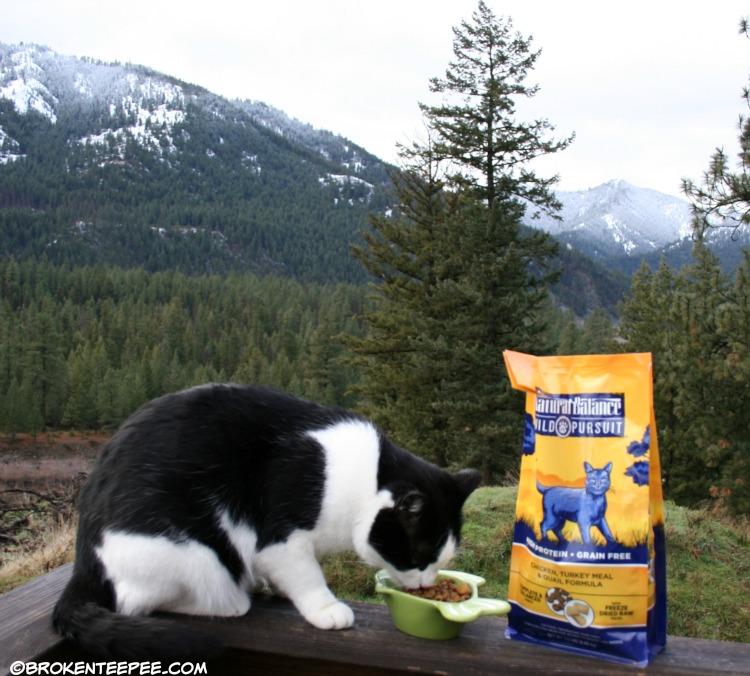 Natural Balance, Wild Pursuit, PetSmart, Harry the Farm cat, natural pet food, #NaturalBalance, #ad