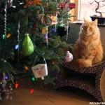 Christmas Memories and My Christmas Tree 2015
