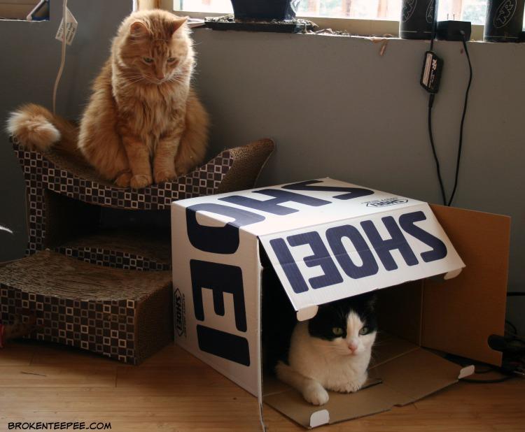 Sherpa the Farm cat, Harry the Farm cat, cat in a box