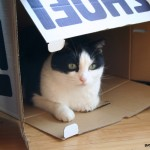 Cat in a Box – Who Owns the Box?