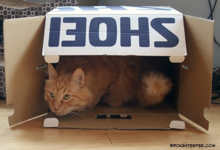 cat in a box, Sherpa the Farm cat