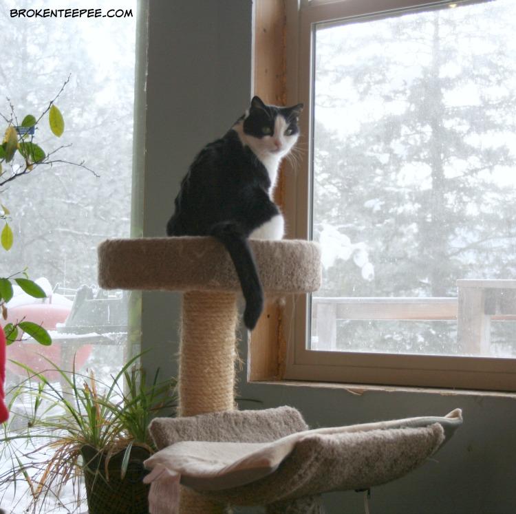 Harry the Farm cat, cat tree
