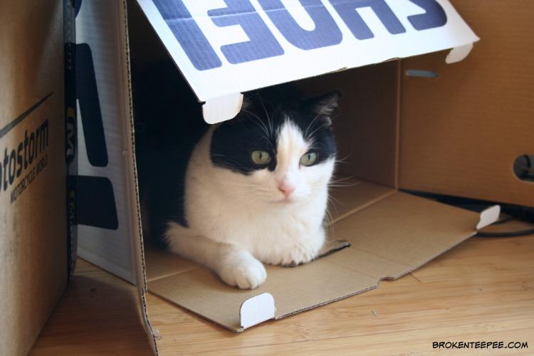 cat in a box, Harry the Farm cat