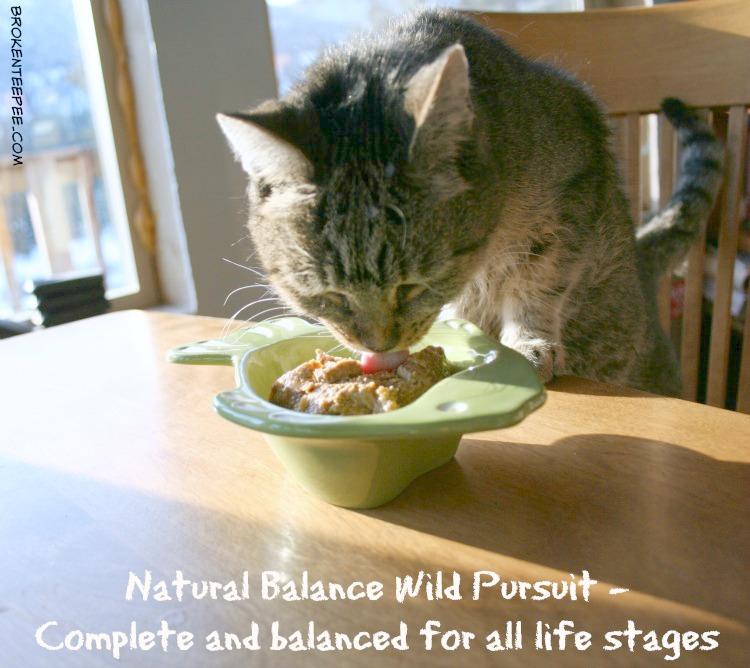 best pet food, natural pet food, Natural Balance, Wild Pursuit, Stinky the Farm cat, PetSmart, #NaturalBalance, #sponsored
