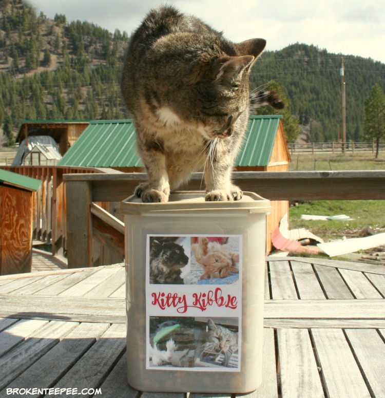 Cat's Pride Fresh & Light Ultimate Care Cat Litter, Personalized Kitty Kibble Container, Stinky the Farm cat, #UltimateLitter, #Ad