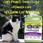 The Ultimate Cat Litter for the Farm Cats Plus a Personalized Kitty Kibble Container Tutorial and a Giveaway