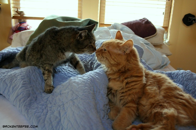 Stinky the Farm cat, Sherpa the Farm cat