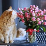 Fresh Flowers Make a Wonderful Gift