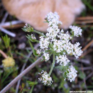 Friday's Hunt, texture, wildflower