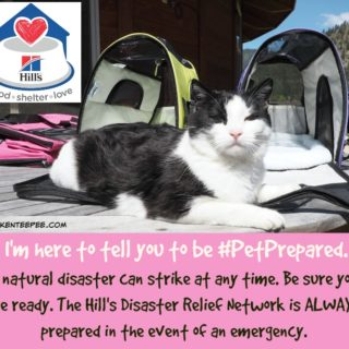 Hill's Disaster Relief Network, Hill's Food Shelter Love®, disaster preparedness, Harry the Farm cat, Hill's Pet Nutrition, #PetPrepared, #AD