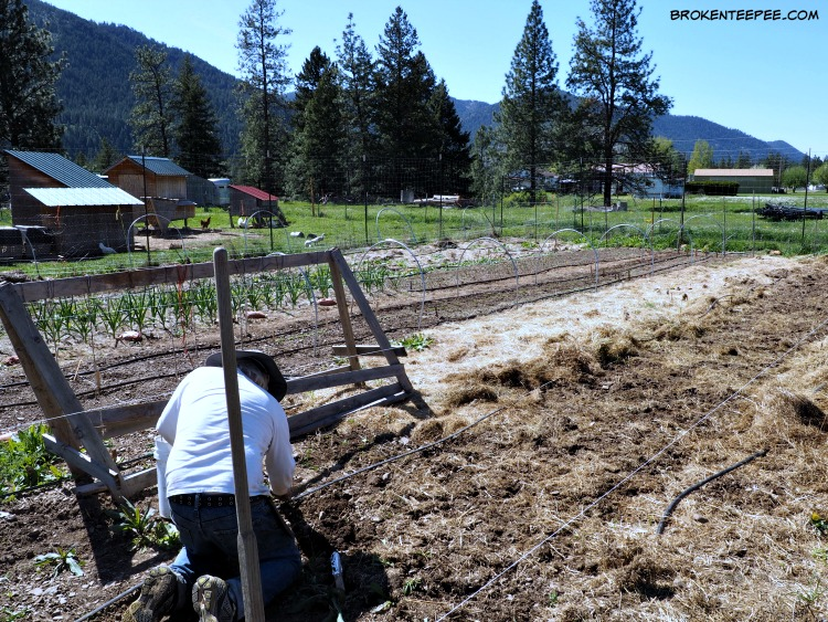 Easy Gardening Tips, #Clorox2, #sponsored