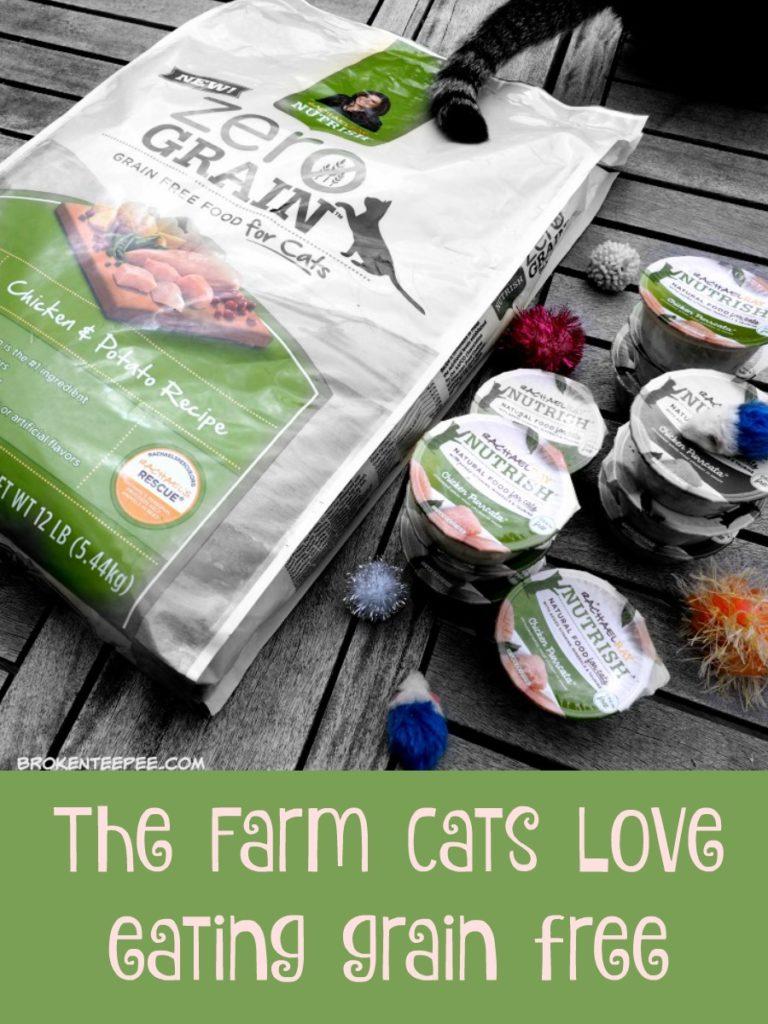 DIY Cat Craft, Cat Cave, Rachel Ray™Nutrish®, cat food, grain free cat food, #NutrishCatCrafts, #CollectiveBias, #ad