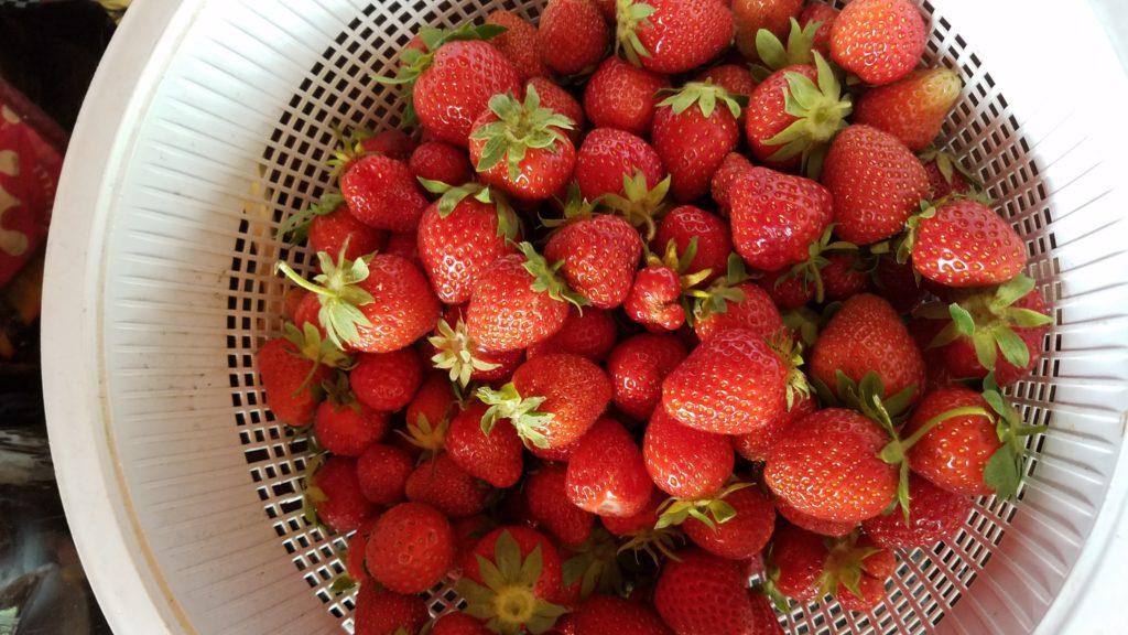 garden, strawberries