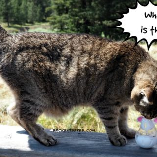 Chewy.com, Stinky the Farm cat, Temptations Cat Treats, Snacky Mouse, AD
