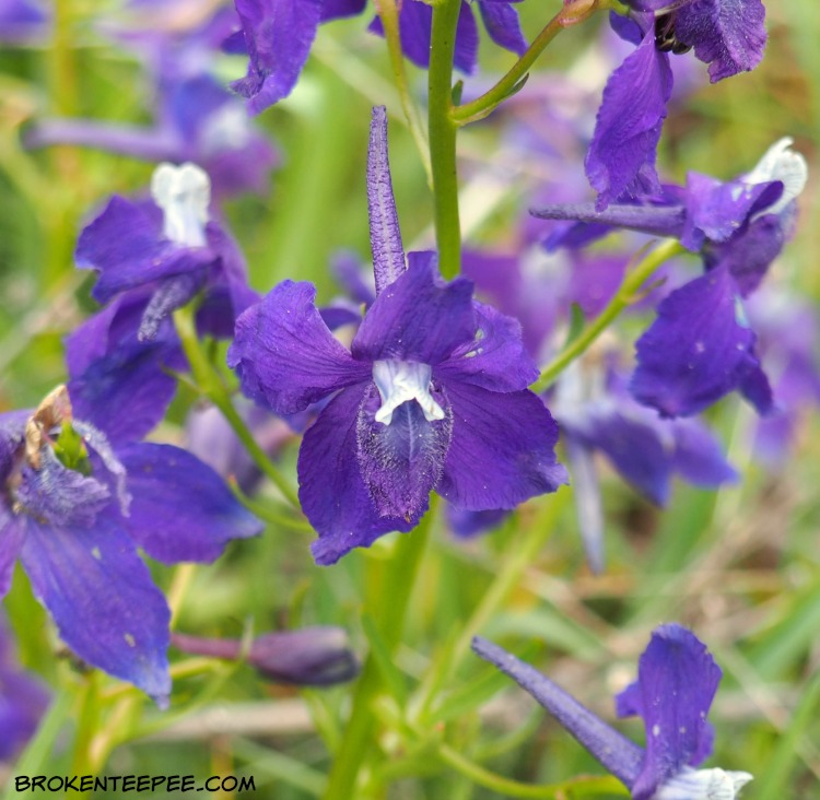 Friday's Hunt, Week's Favorite, Starts with W, Rough, Wildflowers, photos from Montana