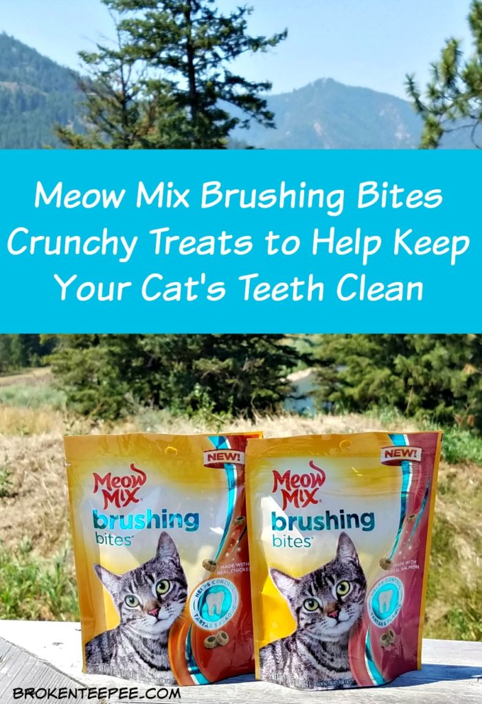 Meow Mix Brushing Bites, cat's dental health, cat treats, #ad