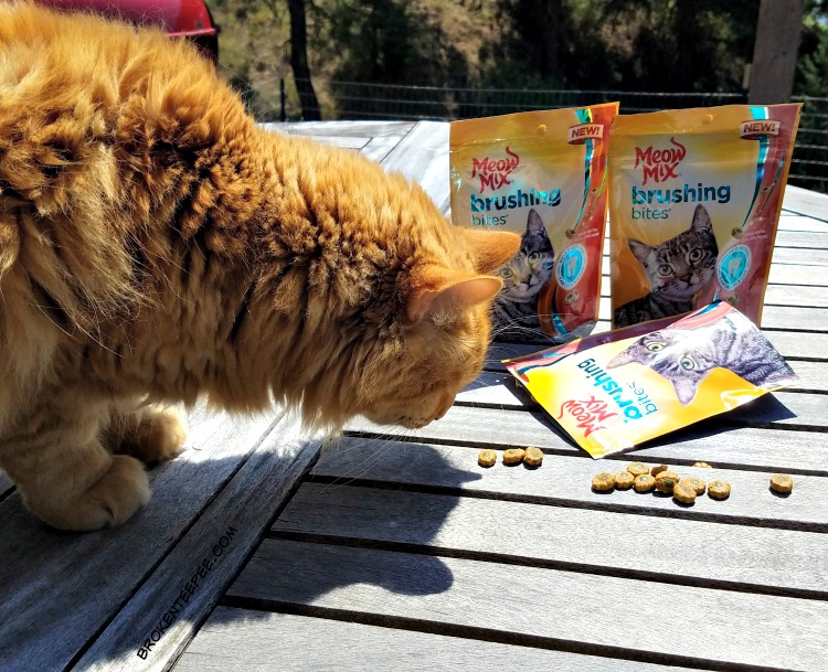Meow Mix Brushing Bites, cat's dental health, cat treats, #ad