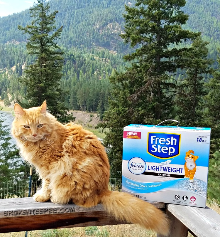 Fresh Step with the Power of Febreze, cat litter, get the stink out, BlogPaws, Stinky no more, PetSmart, #FreshStepFebreze, #Unsmellable, #AD