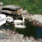 Adding a Pond,Step 4: Add a Decorative Rock Border