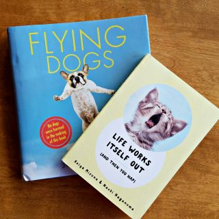 dog-and-cat-lovers,flying-dogs-and-life-works-itself-out