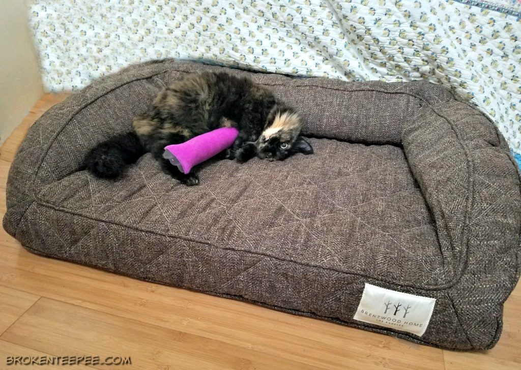 brentwood-home-pet-bed-sponsored