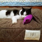 Comfortable Pet Beds for Cats (and Dogs) from Brentwood Home with a Giveaway