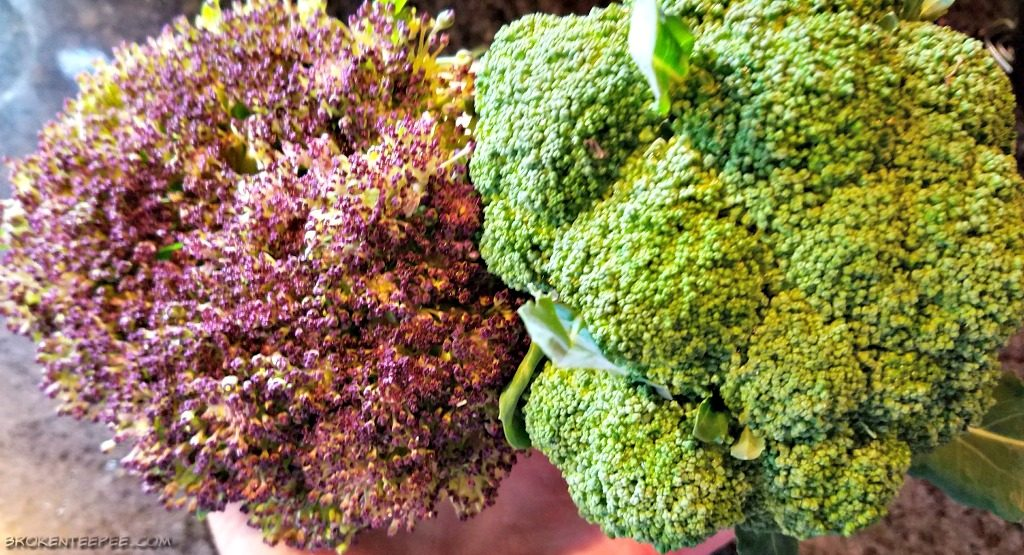 Easy Vegetable and Cheese Casserole, Leftover Recipe, broccoli from the garden