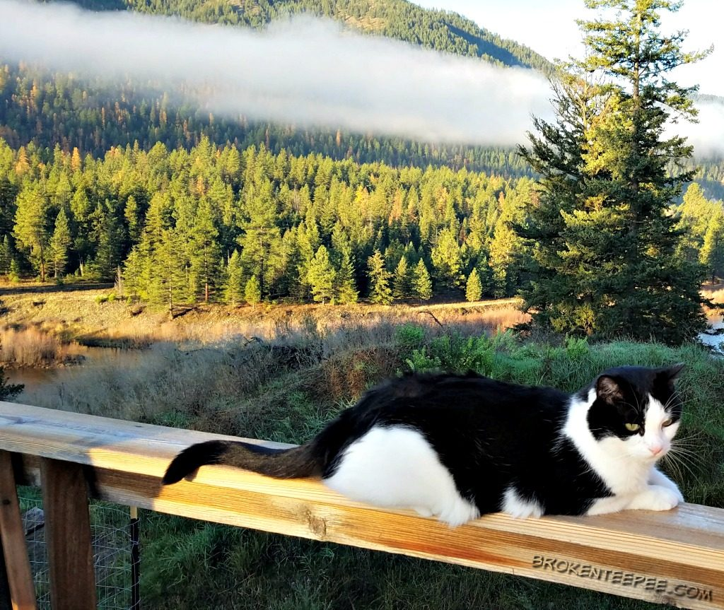Fridays-hunt-cats-cats