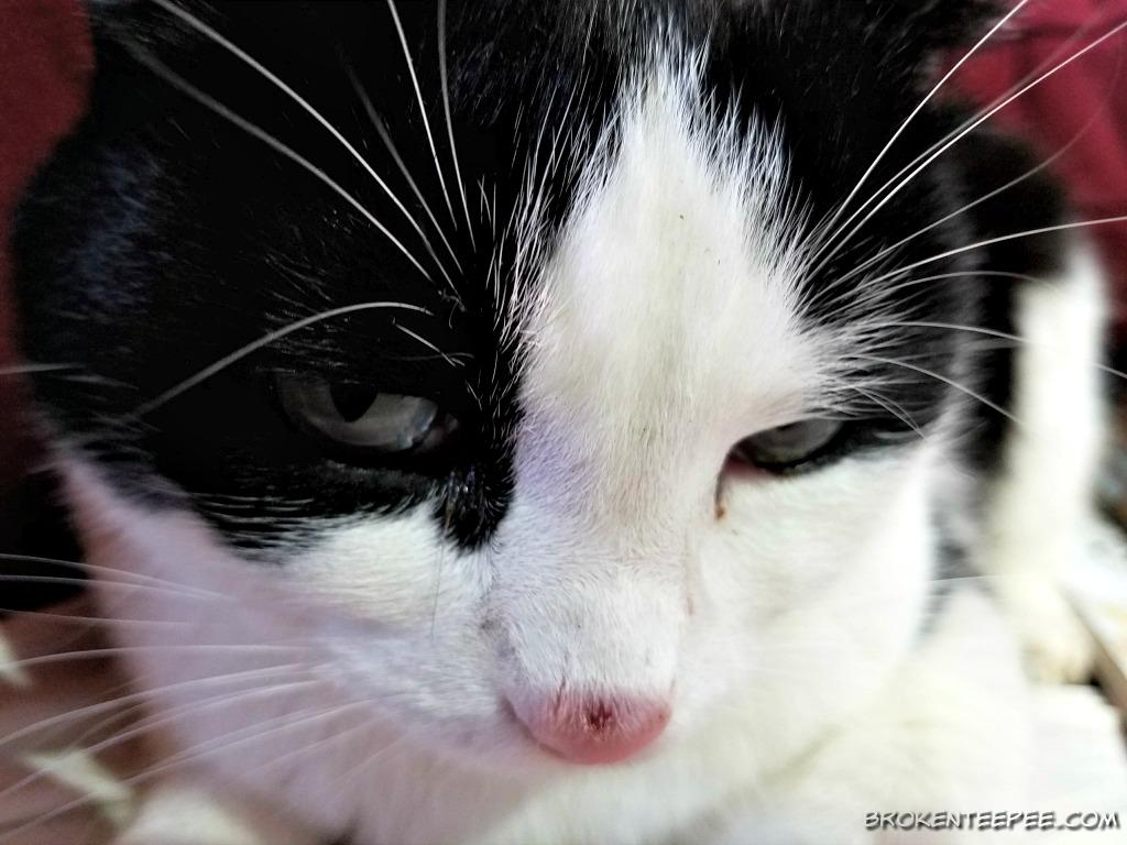 Friday's Hunt – Farm Cat Photos