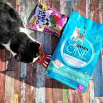 Share in the Savings with Purina and Target with Free Printables