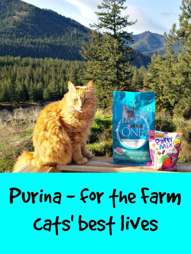 Purina savings, Target, Sherpa the Farm cat, #Txt4Pet, AD