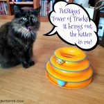 A Great Gift For Cats – The Pet Stages Tower of Tracks
