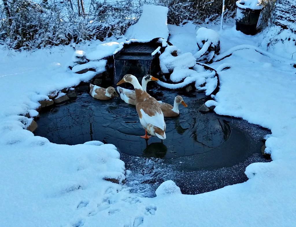 Friday's Hunt – Happy Ducks, Flowers and a Tree