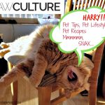 PawCulture Brings You Pet Lifestyle, Pet DIY, Pet Recipes, Pet Tips and More