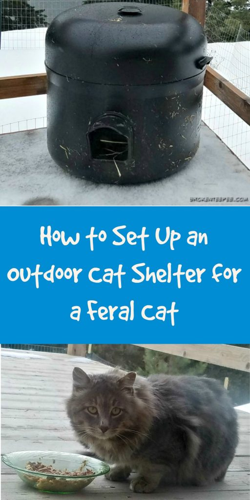 feral cat care, setting up a feral cat shelter,
