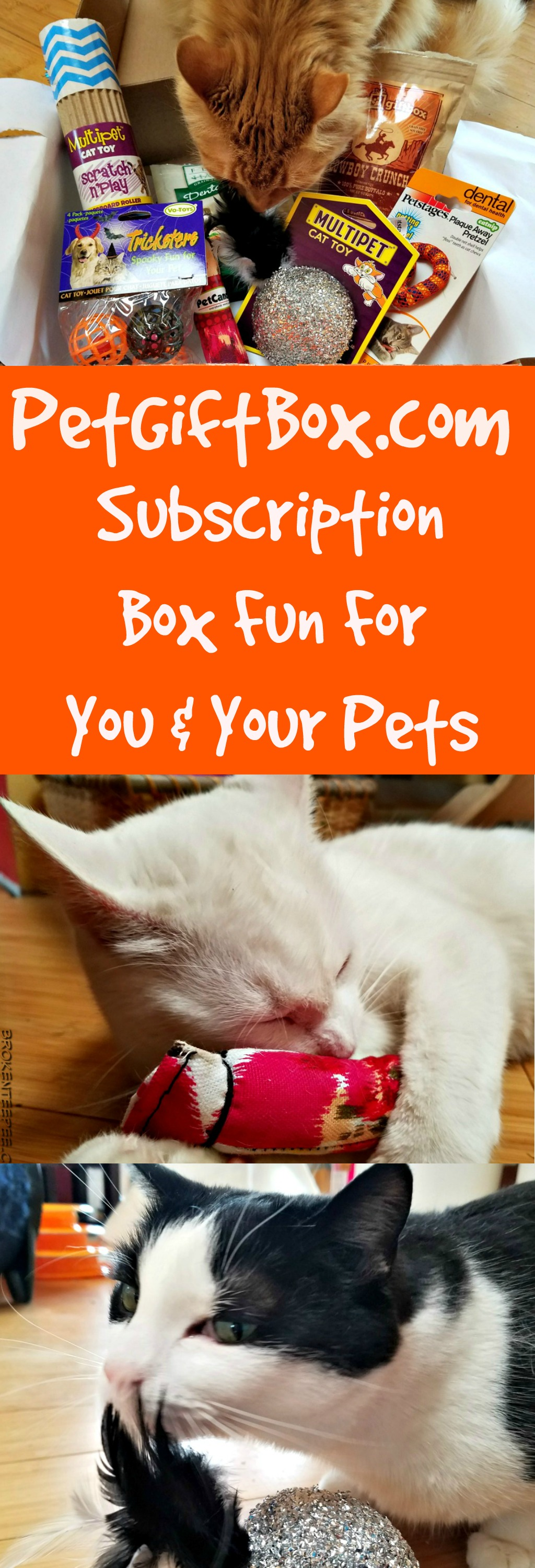 pet subscription box, PetGiftBox.com, cat toys, cat treats, sponsored