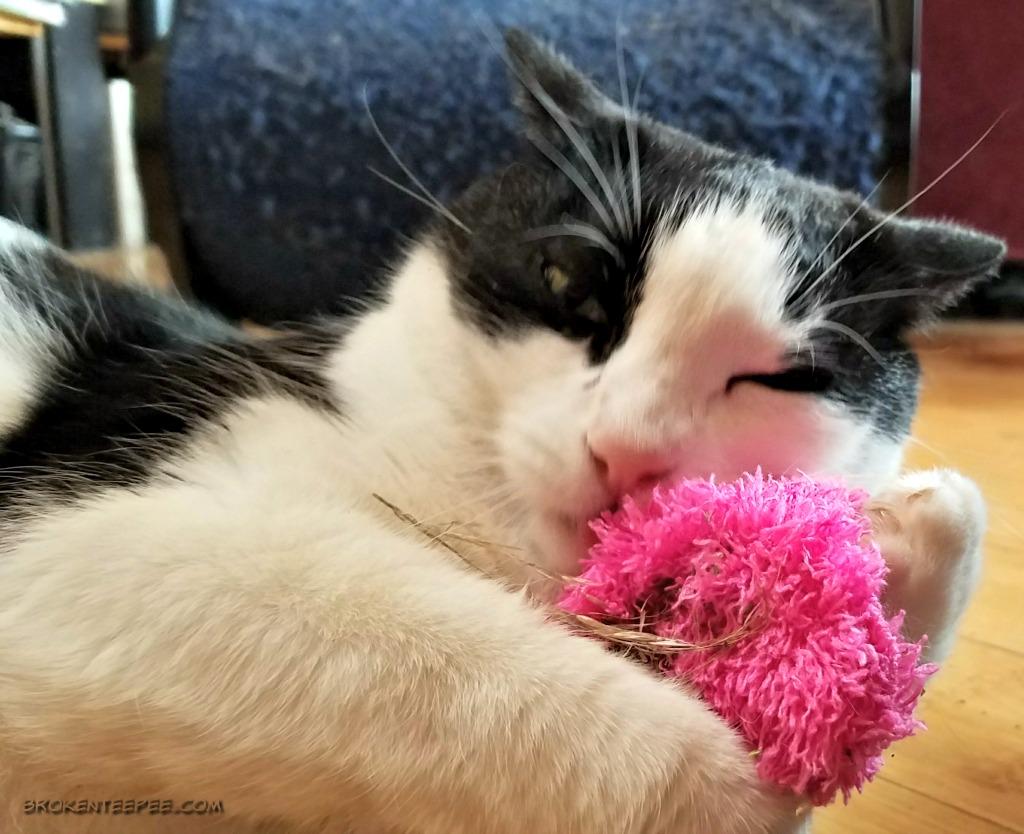 Subscription Box Fun for Cats (and Dogs) – petgiftbox.com