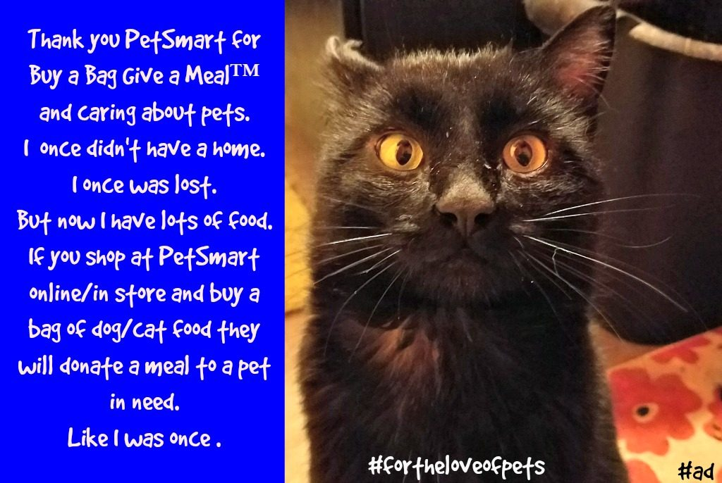 PetSmart, Buy a Bag Give a Meal, BlogPaws, #fortheloveofpets, #sponsored