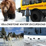 Yellowstone Winter Excursions – Dog Sled Adventures and More