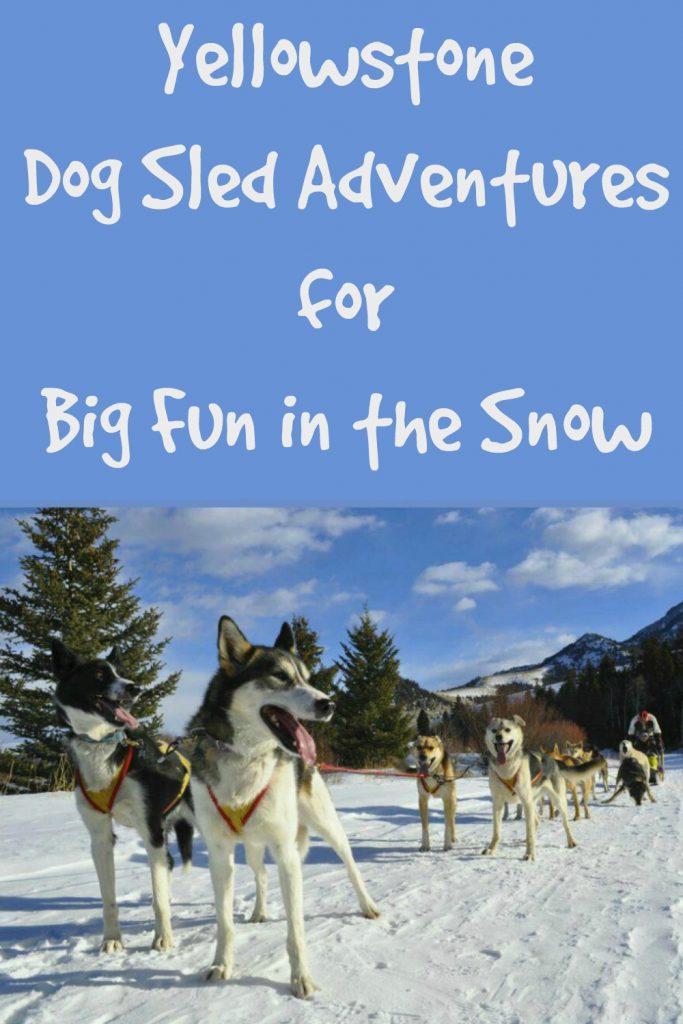yellowstone dog sled adventures