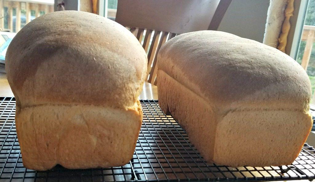 Amish Community Cookbook, Honey Wheat Bread
