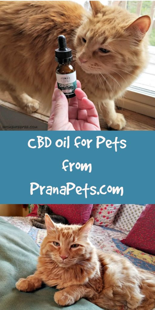 CBD Oil for Cat, PranaPets, Sherpa the Farm cat, #AD