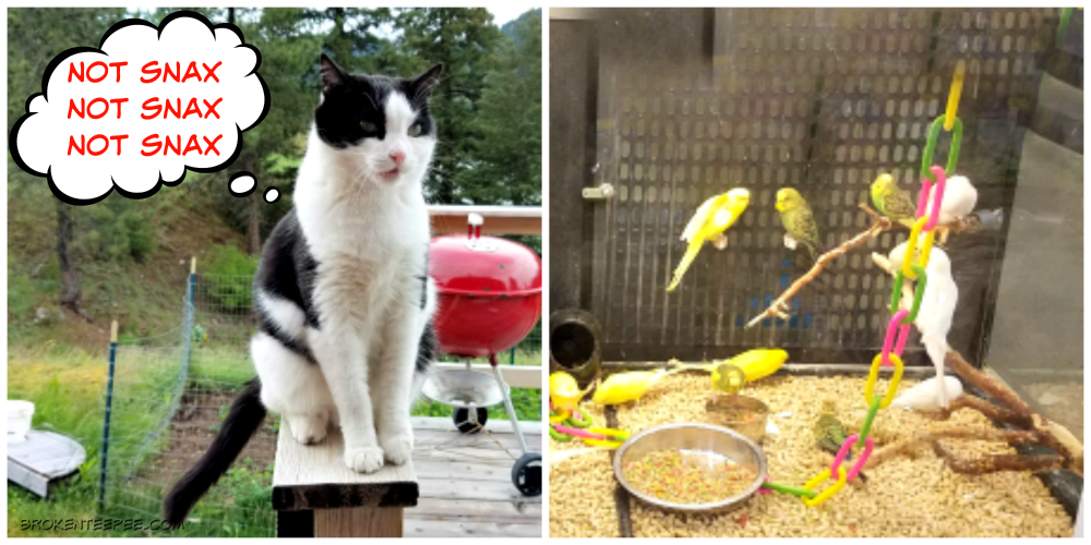 How to be a Farm Cat, Purina at PetSmart, Purina, PetSmart, #PurinaMysteries, #AD