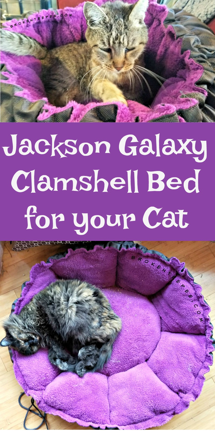 The farm cats celebrate national adopt a cat month for Jackson galaxy phone number