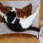 A Luxury Cat Hammock for the Farm Cats (Coupon Code)