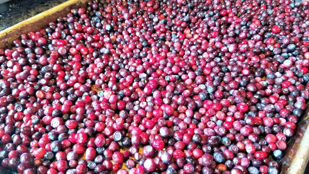 freezing fruit for the winter, huckleberries