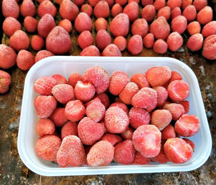 Freezing Fruit For the Winter: Strawberries, Cherries and Huckleberries