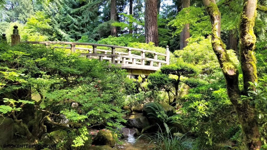 Travelportland the portland japanese garden a place of for Portland japanese garden koi