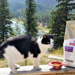 The Care and Feeding of the Farm Cats for Healthier Pets. Happier Lives™